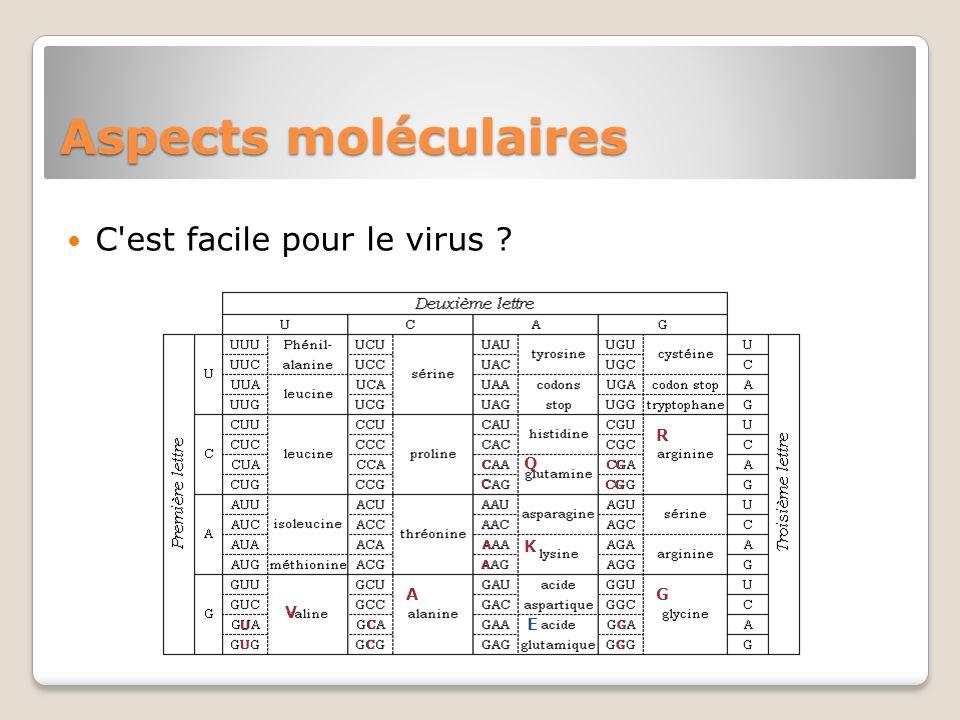 Aspects moléculaires C'est facile pour le virus ? E A C C U U V R CG Q C C G K A A G G