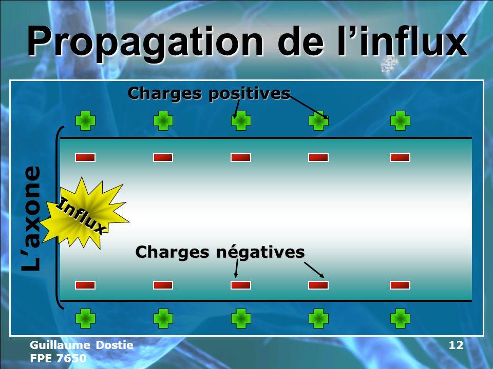 Guillaume Dostie FPE 7650 12 Propagation de linflux Laxone Charges positives Charges négatives Influx