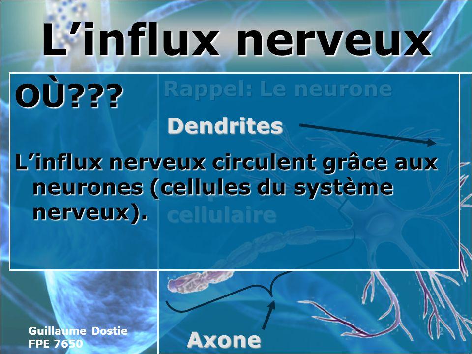 Guillaume Dostie FPE 7650 2 Rappel: Le neurone Linflux nerveux Corps cellulaire Axone OÙ??.