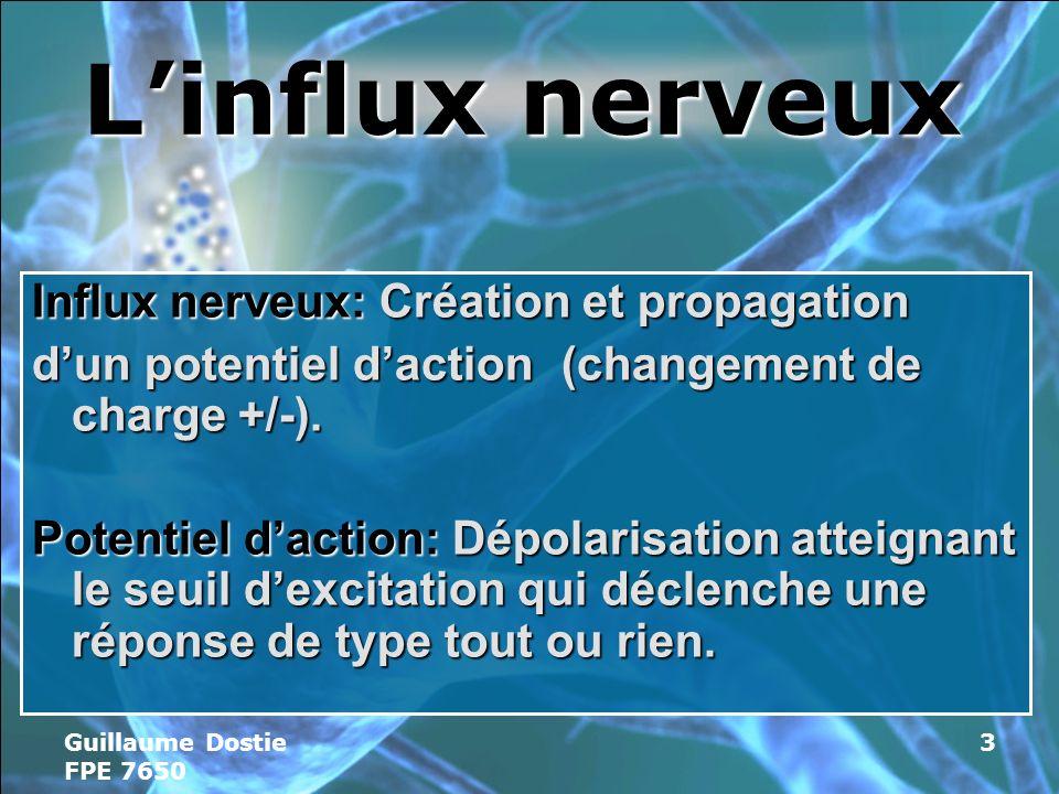 Guillaume Dostie FPE 7650 3 Linflux nerveux Influx nerveux: Création et propagation dun potentiel daction (changement de charge +/-).