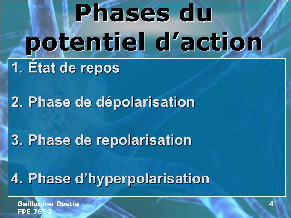 Guillaume Dostie FPE 7650 4 Phases du potentiel daction 1.État de repos 2.Phase de dépolarisation 3.Phase de repolarisation 4.Phase dhyperpolarisation