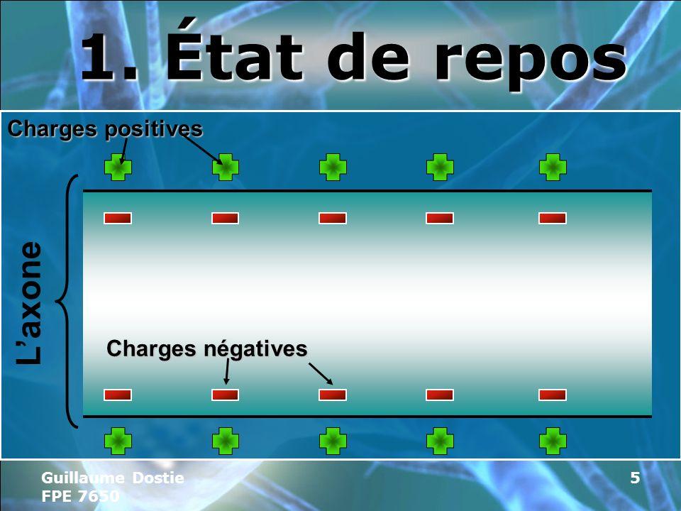 Guillaume Dostie FPE 7650 5 1. État de repos Laxone Charges positives Charges négatives