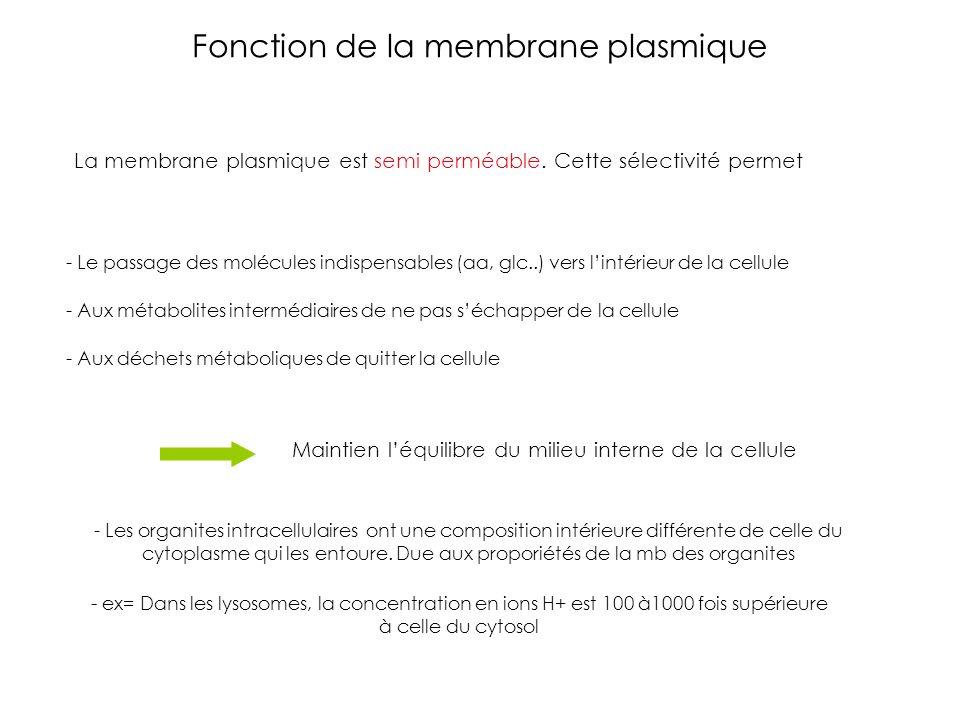 Fonction de la membrane plasmique La membrane plasmique est semi perméable. Cette sélectivité permet - Le passage des molécules indispensables (aa, gl