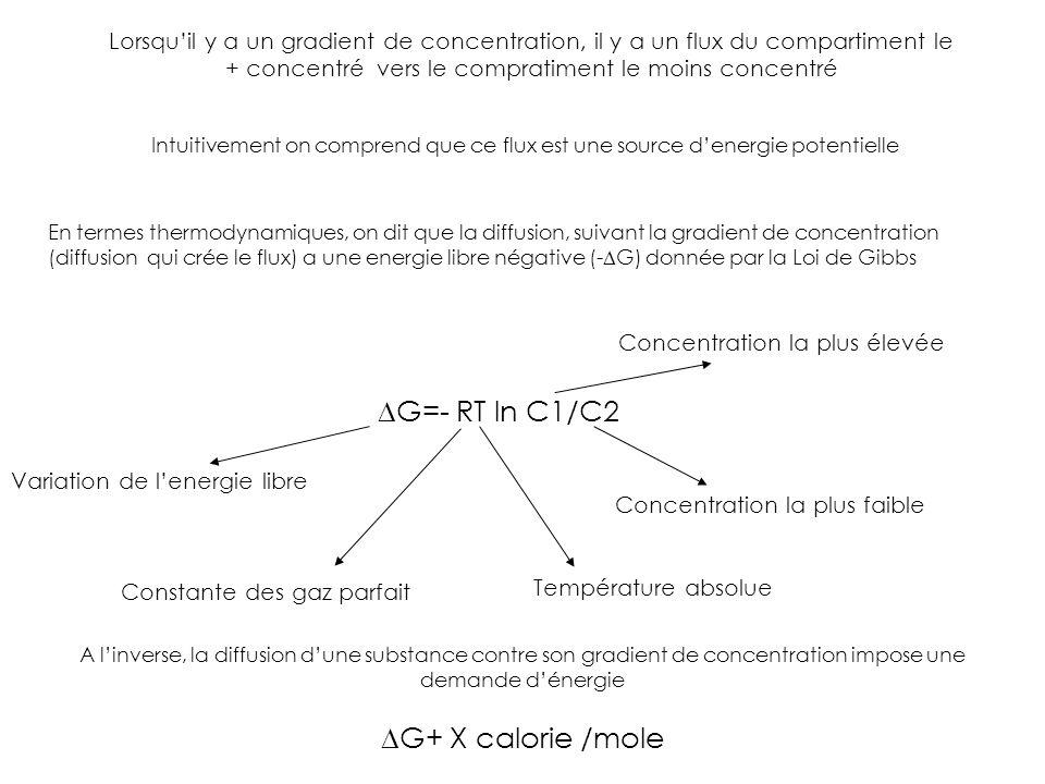 Lorsquil y a un gradient de concentration, il y a un flux du compartiment le + concentré vers le compratiment le moins concentré Intuitivement on comp