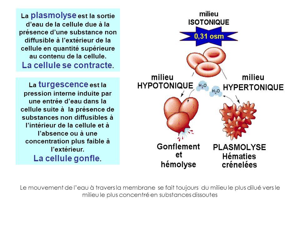 La plasmolyse est la sortie deau de la cellule due à la présence dune substance non diffusible à lextérieur de la cellule en quantité supérieure au co