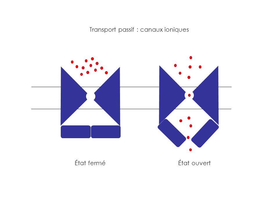 Transport passif : canaux ioniques État ferméÉtat ouvert