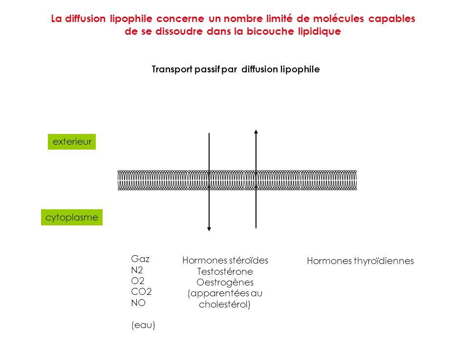 exterieur cytoplasme Gaz N2 O2 CO2 NO (eau) Hormones stéroïdes Testostérone Oestrogènes (apparentées au cholestérol) Hormones thyroïdiennes Transport