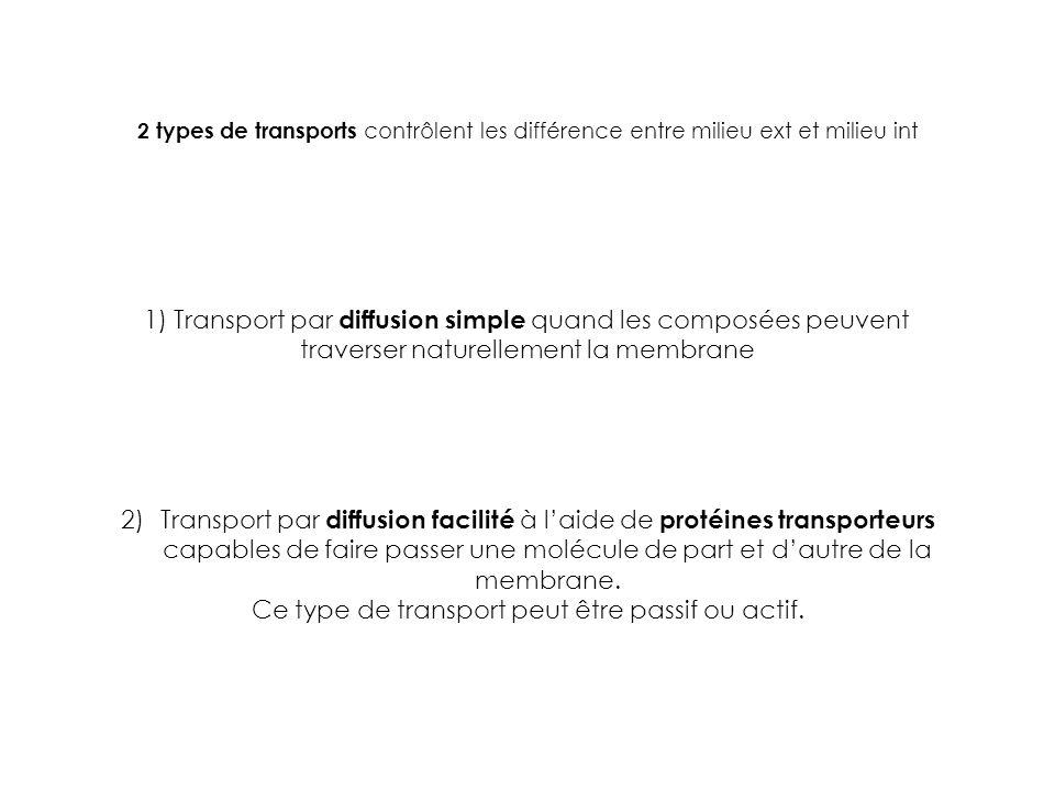 2 types de transports contrôlent les différence entre milieu ext et milieu int 1) Transport par diffusion simple quand les composées peuvent traverser