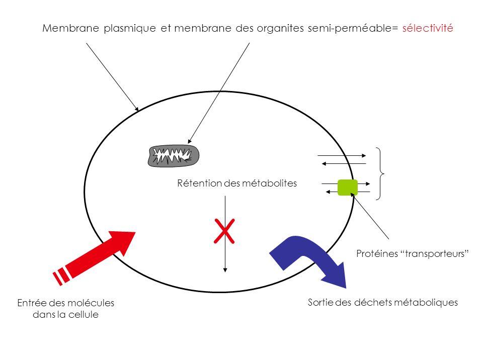 X Membrane plasmique et membrane des organites semi-perméable= sélectivité Protéines transporteurs Entrée des molécules dans la cellule Sortie des déc