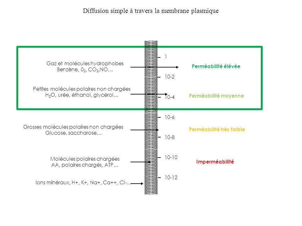 1 10-2 10-4 10-6 10-8 10-10 10-12 Perméabilité élévée Perméabilité moyenne Perméabilité très faible Imperméabilité Gaz et molécules hydrophobes Benzèn