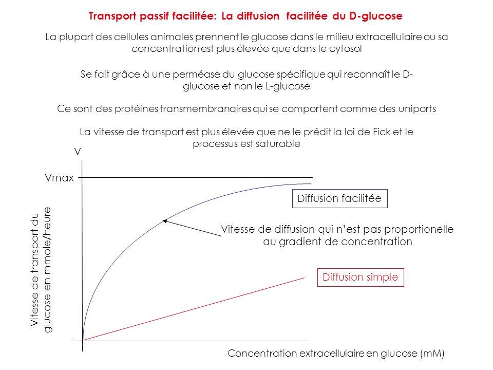 Transport passif facilitée: La diffusion facilitée du D-glucose La plupart des cellules animales prennent le glucose dans le milieu extracellulaire ou
