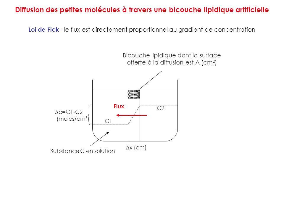 Diffusion des petites molécules à travers une bicouche lipidique artificielle Loi de Fick = le flux est directement proportionnel au gradient de conce