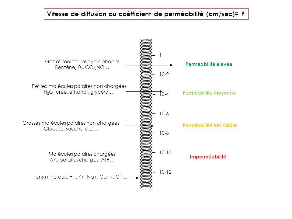Vitesse de diffusion ou coéfficient de perméabilité (cm/sec)= P 1 10-2 10-4 10-6 10-8 10-10 10-12 Perméabilité élévée Perméabilité moyenne Perméabilit