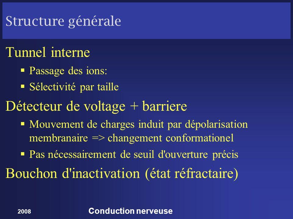 2008 Conduction nerveuse Structure générale Tunnel interne Passage des ions: Sélectivité par taille Détecteur de voltage + barriere Mouvement de charg