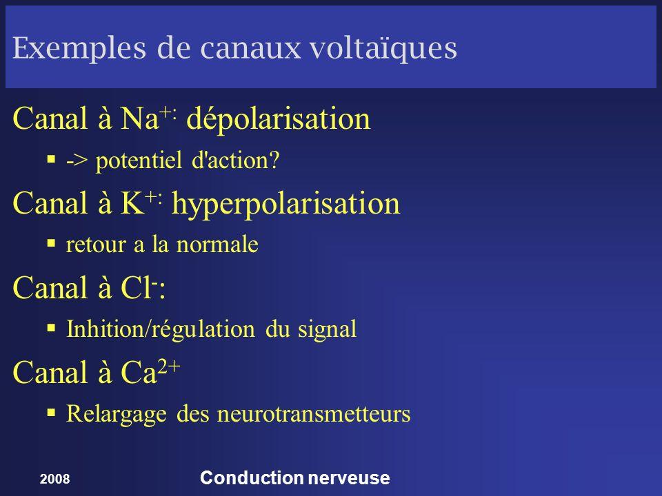 2008 Conduction nerveuse Exemples de canaux voltaïques Canal à Na +: dépolarisation -> potentiel d'action? Canal à K +: hyperpolarisation retour a la