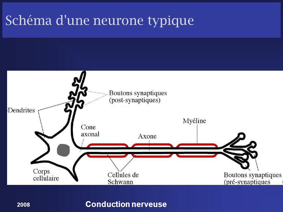 2008 Conduction nerveuse Schéma d'une neurone typique