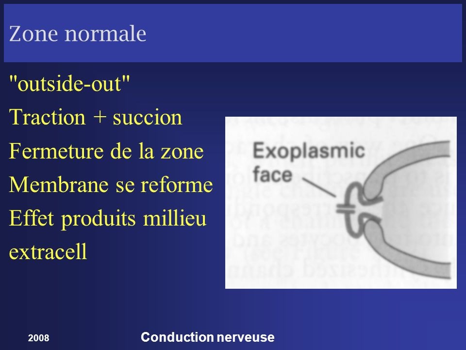 2008 Conduction nerveuse Zone normale