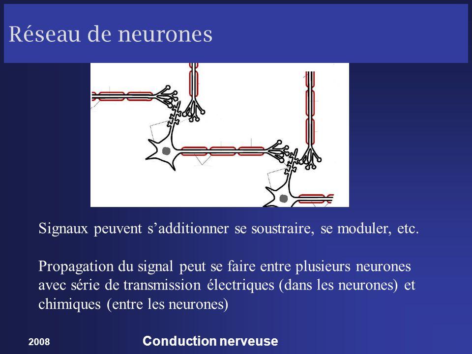 2008 Conduction nerveuse Réseau de neurones Signaux peuvent sadditionner se soustraire, se moduler, etc. Propagation du signal peut se faire entre plu