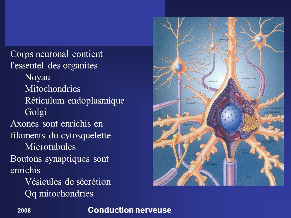 2008 Conduction nerveuse Corps neuronal contient l'essentel des organites Noyau Mitochondries Réticulum endoplasmique Golgi Axones sont enrichis en fi