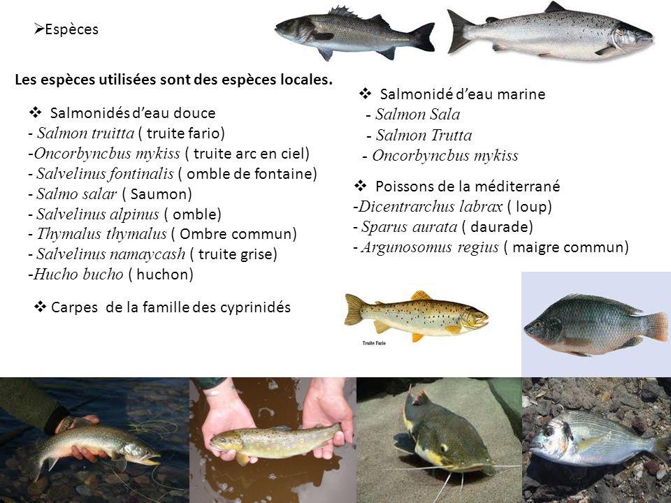 Espèces Salmonidés deau douce - Salmon truitta ( truite fario) -Oncorbyncbus mykiss ( truite arc en ciel) - Salvelinus fontinalis ( omble de fontaine)