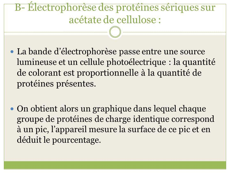 B- Électrophorèse des protéines sériques sur acétate de cellulose : La bande délectrophorèse passe entre une source lumineuse et un cellule photoélectrique : la quantité de colorant est proportionnelle à la quantité de protéines présentes.