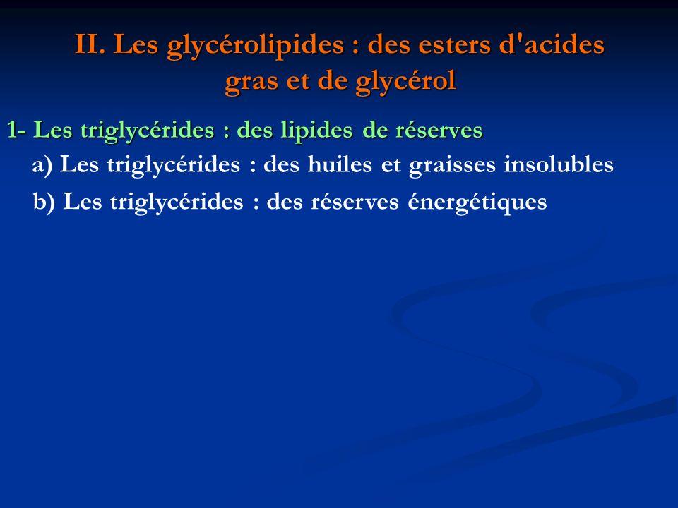 Graisses moins oxydées que sucres = libèrent d avantage d énergie lors de leur oxydation (dans les mitochondries : fournit ATP) Stockées sous formes anhydre (tandis que le glycogène se combine avec entre 2 et 6 fois sont poids en eau) = 6 fois plus d énergie (poids pour poids) Non solubles donc non transportables Immobilisés (dans espaces lacunaires ou dans cellules)= dégénérescence cellulaire graisseuse Cas des adipocytes animaux : Localisation : sous-cutanés ou cavité abdominale cellules spécialisées dans synthèse et stockage Rôle : régulateur thermique et isolant Ex : pingouins, baleines, phoques, exposés à basses températures Corps humain (tissu adipeux blanc) : 21% de graisse chez l homme (localisation androïde) 26% chez le femme (localisation gynoïde) Permet de survivre 2 ou 3 mois (glycogène fournit moins de 10 h d énergie ) Utilisées par les hibernants (tissu adipeux brun) l hiver ou par les graines oléagineuses au printemps.