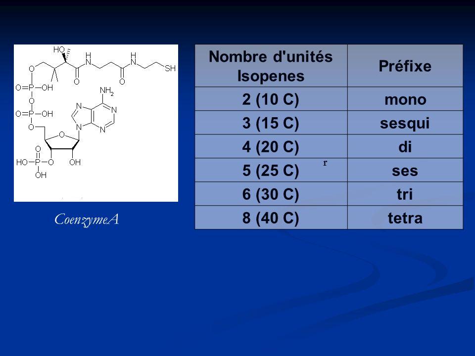 2- Les hydrocarbures polyisopréniques : produits secondaires fréquents chez les végétaux a) monoterpènes = 10 C ex : pyrèthre des insecticides issus des feuilles de chrysanthème huiles essentielles de citron, basilique, sauge, menthe b) sesquiterpènes = 15 C ex : lactones au goût amère parfois toxiques c) diterpènes = 20 C dans les résines d) triterpènes = 30 C - Squalène : précurseur du cholestérol synthétisé à partir de trois isoprènes associés tête bêche e) polyterpénoïdes (C5)n avec n>20 - caoutchouc (milliers d isoprènes)