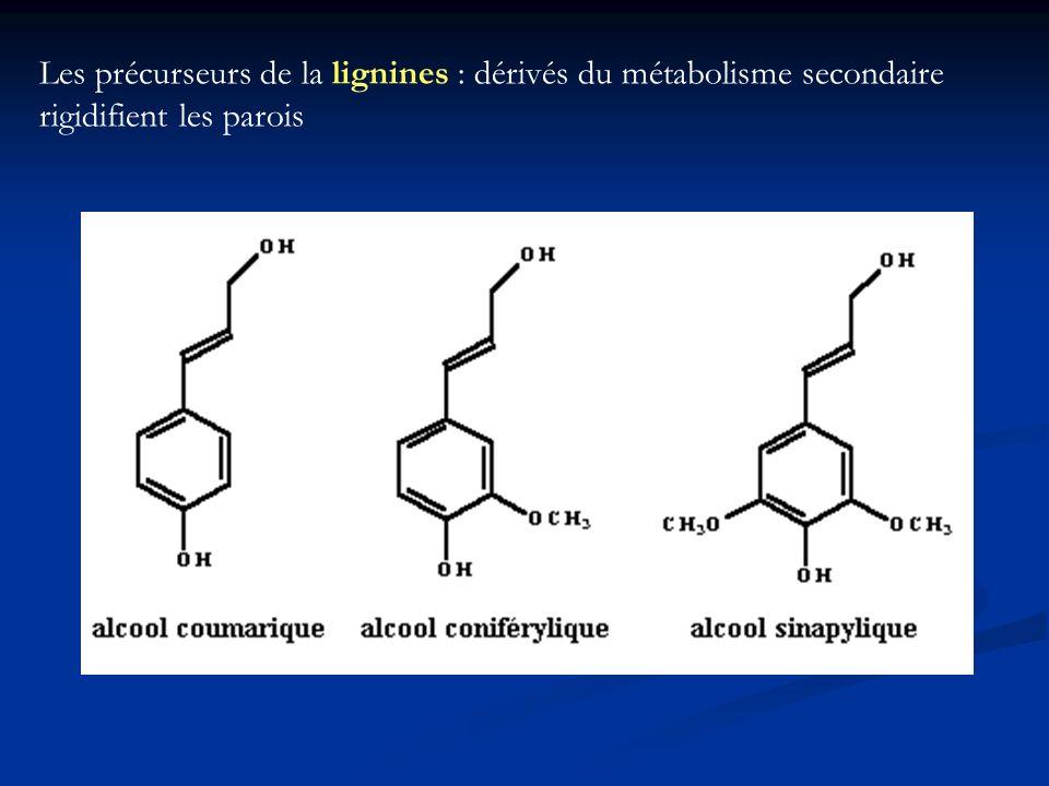 Structure de la lignine