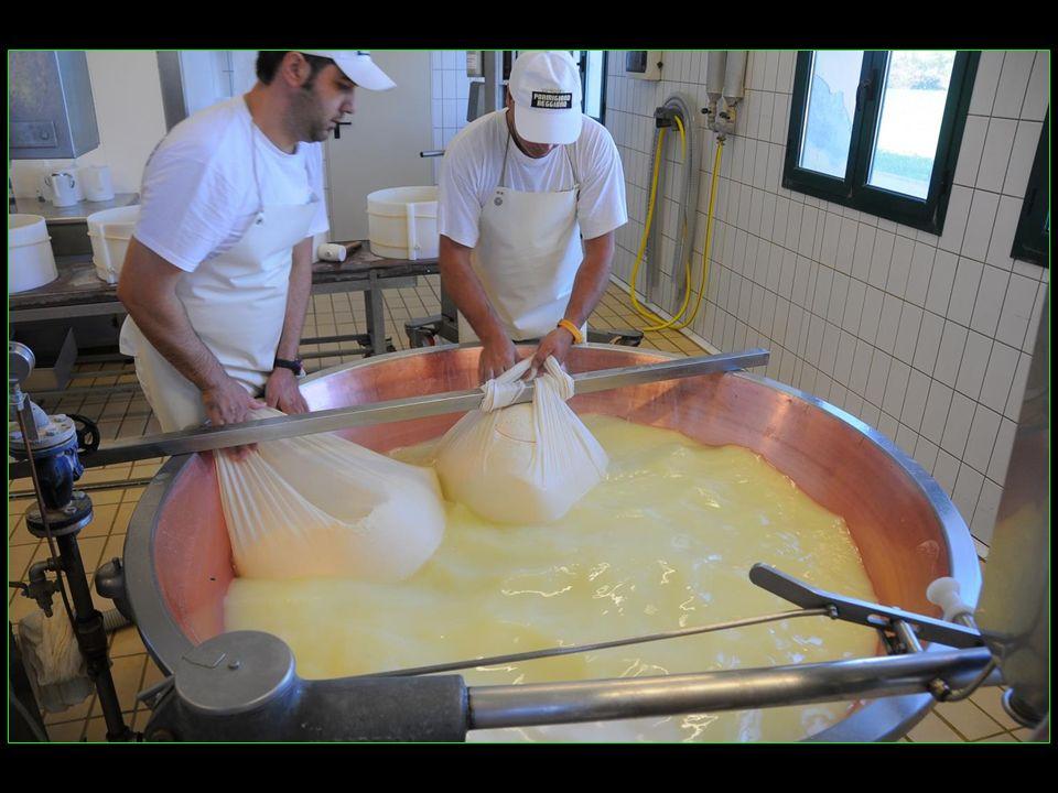 Le cahier des charges du parmesan interdit lutilisation des fourrages enlisés et fermentés