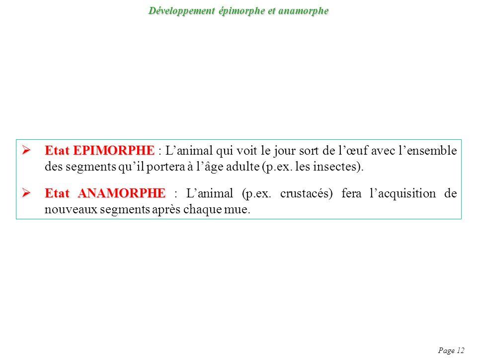 Développement épimorphe et anamorphe Page 12 Etat EPIMORPHE Etat EPIMORPHE : Lanimal qui voit le jour sort de lœuf avec lensemble des segments quil portera à lâge adulte (p.ex.
