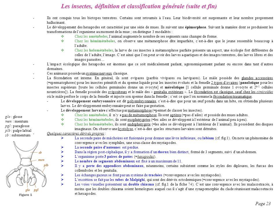 Les insectes, définition et classification générale (suite et fin) Page 23 -Ils ont conquis tous les biotopes terrestres. Certains sont retournés à le