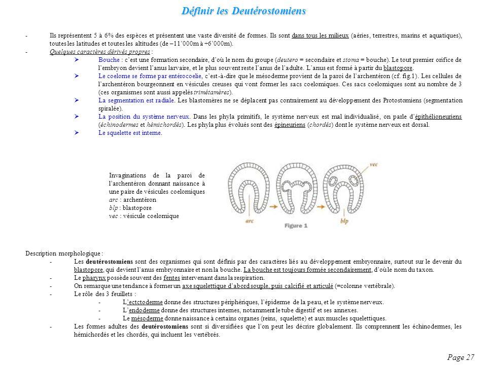 Définir les Deutérostomiens Page 27 -Ils représentent 5 à 6% des espèces et présentent une vaste diversité de formes. Ils sont dans tous les milieux (