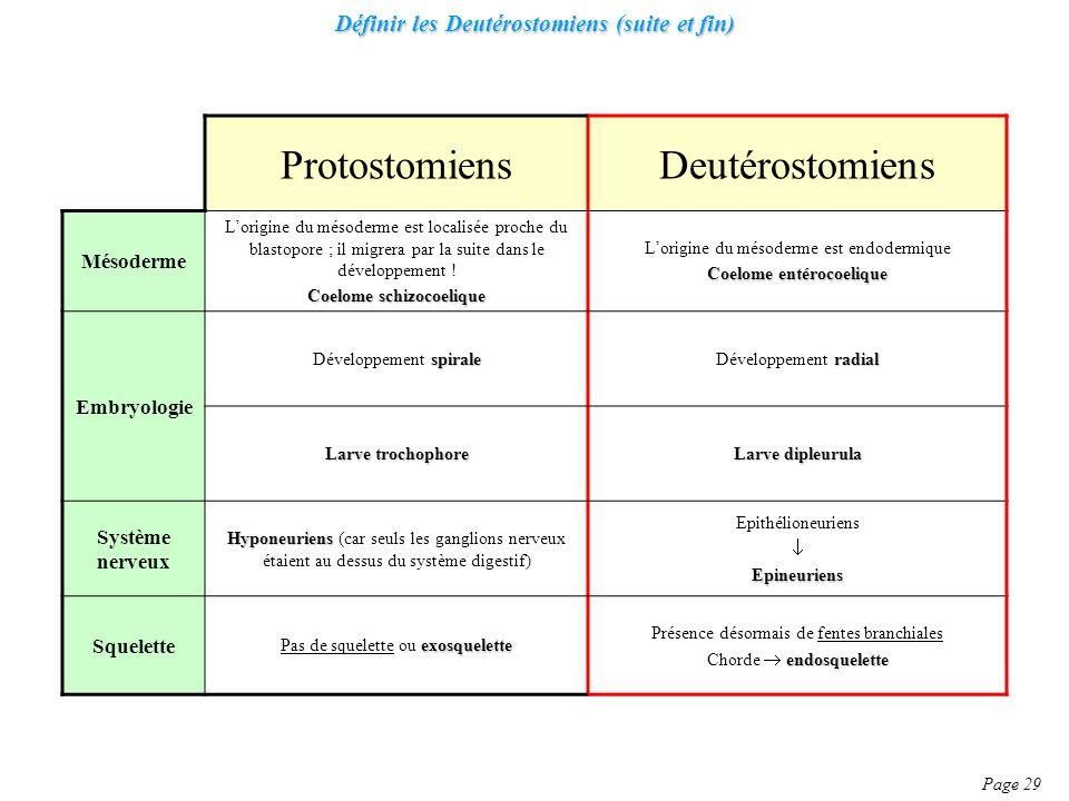 Définir les Deutérostomiens (suite et fin) Page 29 ProtostomiensDeutérostomiens Mésoderme Lorigine du mésoderme est localisée proche du blastopore ; il migrera par la suite dans le développement .