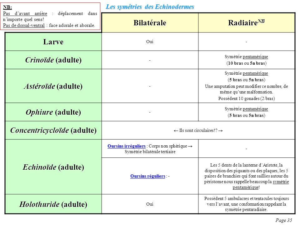 Les symétries des Echinodermes Page 35 Bilatérale Radiaire NB Larve Oui- Crinoïde (adulte) - Symétrie pentamérique (10 bras ou 5n bras) Astéroïde (adu