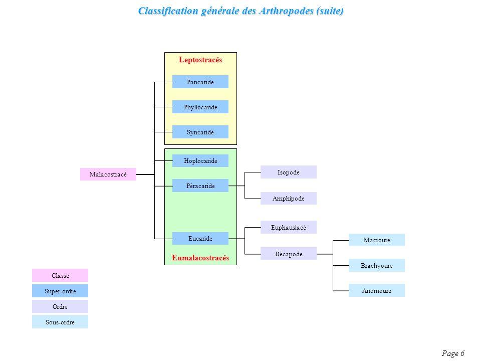 Classification générale des Arthropodes (suite) Page 6 Malacostracé Classe Ordre Super-ordre Syncaride Hoplocaride Pancaride Péracaride Phyllocaride E