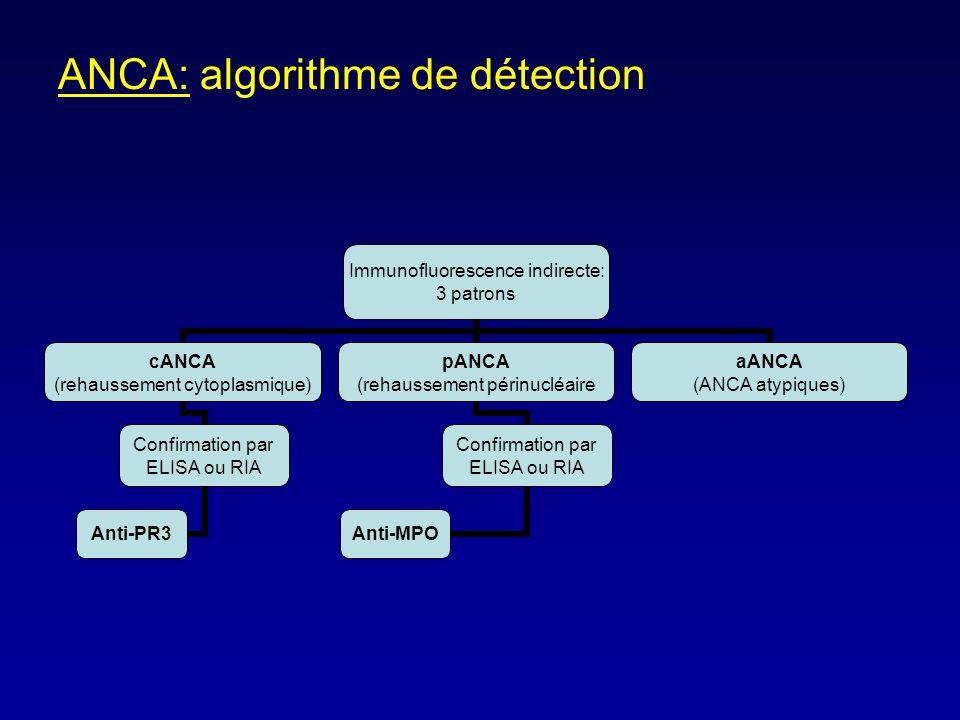 ANCA: algorithme de détection Immunofluorescence indirecte: 3 patrons cANCA (rehaussement cytoplasmique) Confirmation par ELISA ou RIA Anti-PR3 pANCA (rehaussement périnucléaire Confirmation par ELISA ou RIA Anti-MPO aANCA (ANCA atypiques)