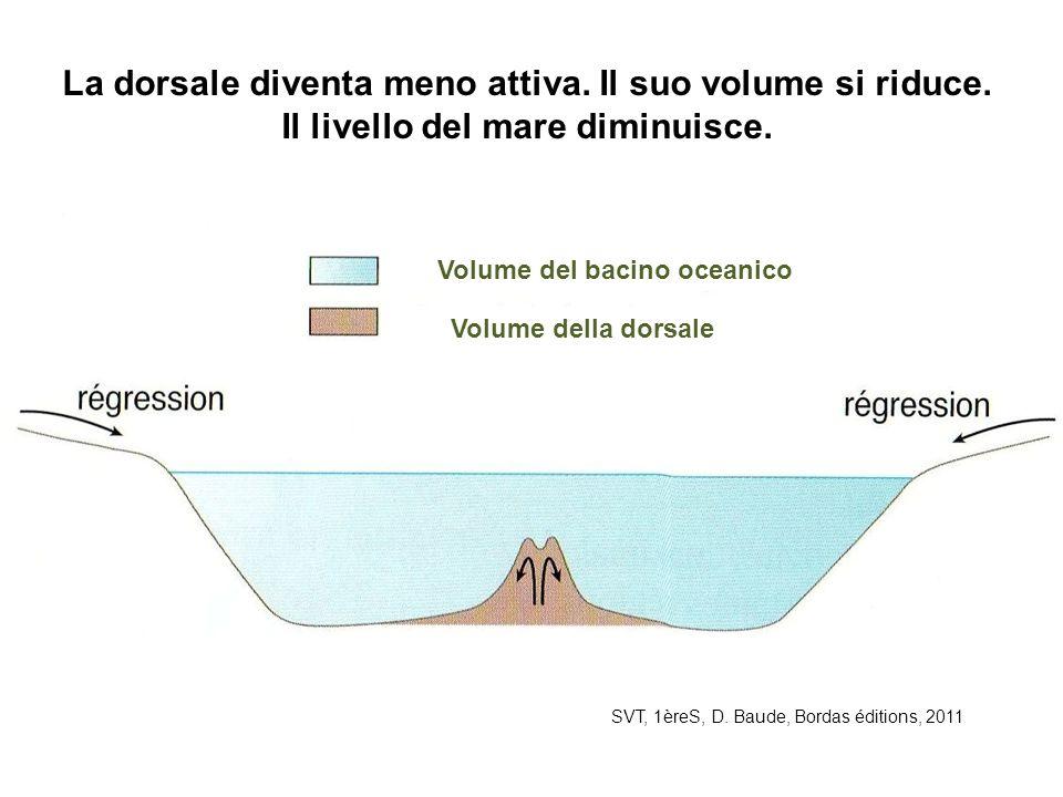 SVT, 1èreS, D. Baude, Bordas éditions, 2011 La dorsale diventa meno attiva. Il suo volume si riduce. Il livello del mare diminuisce. Volume del bacino