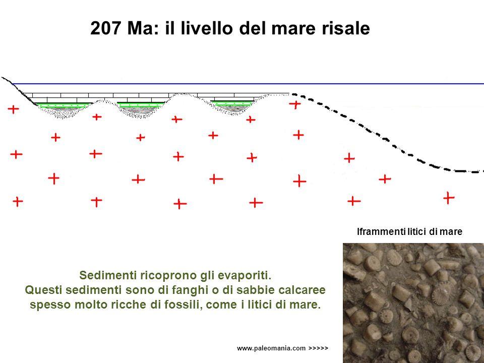 Sedimenti ricoprono gli evaporiti. Questi sedimenti sono di fanghi o di sabbie calcaree spesso molto ricche di fossili, come i litici di mare. Iframme