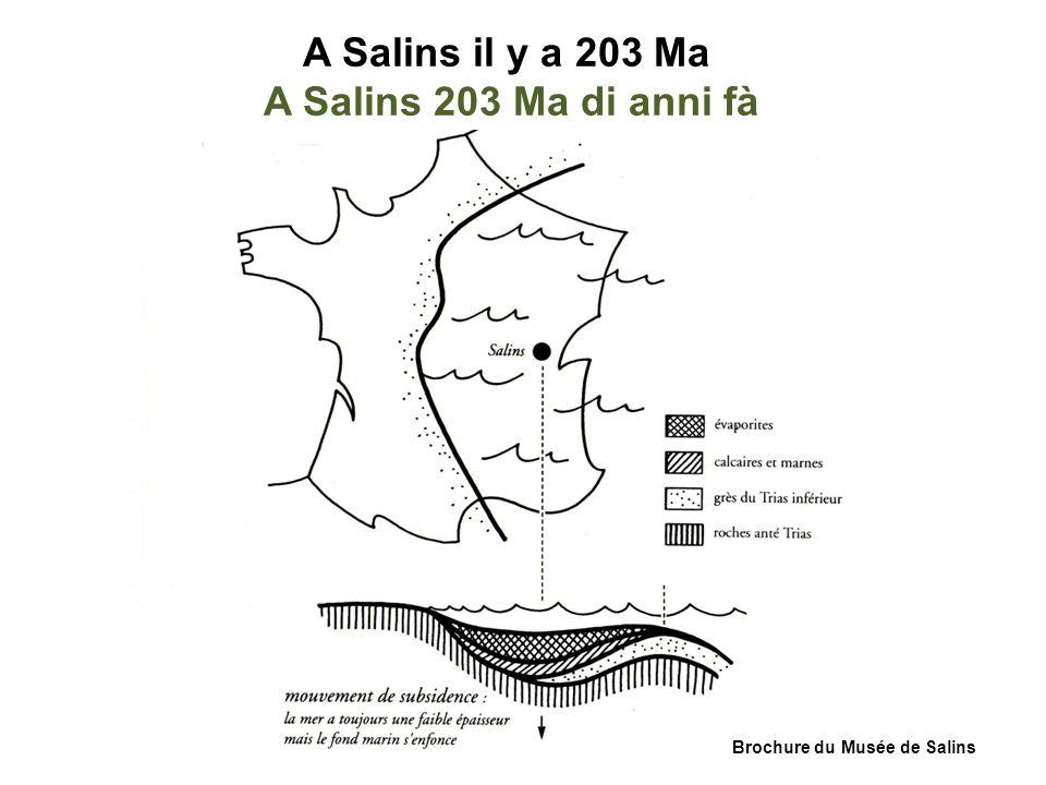 A Salins il y a 203 Ma A Salins 203 Ma di anni fà Brochure du Musée de Salins