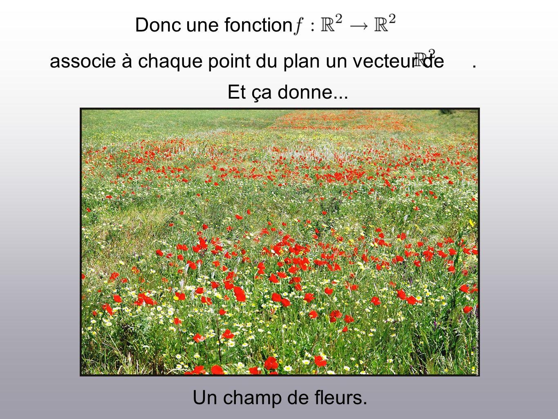 Donc une fonction associe à chaque point du plan un vecteur de. Et ça donne... Un champ de fleurs.