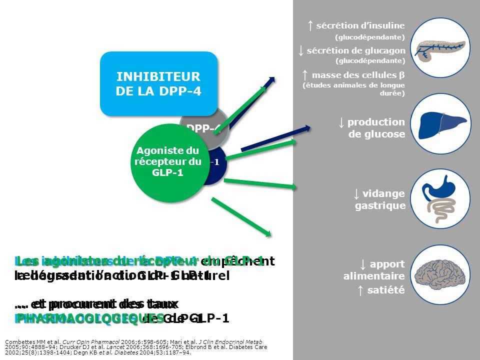 Les inhibiteurs de la DPP-4 PHYSIOLOGIQUES Les inhibiteurs de la DPP-4 empêchent la dégradation du GLP-1 naturel … et procurent des taux PHYSIOLOGIQUE