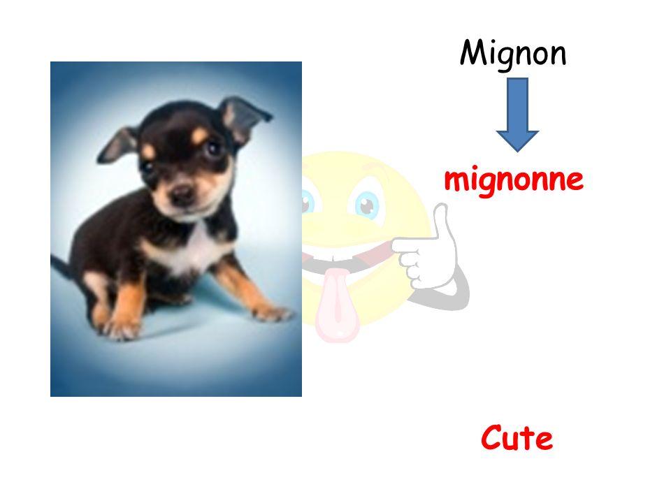 Cute mignonne Mignon