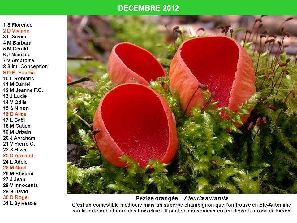 DECEMBRE 2012 1 S Florence 2 D Viviane 3 L Xavier 4 M Barbara 5 M Gérald 6 J Nicolas 7 V Ambroise 8 S Im. Conception 9 D P. Fourier 10 L Romaric 11 M