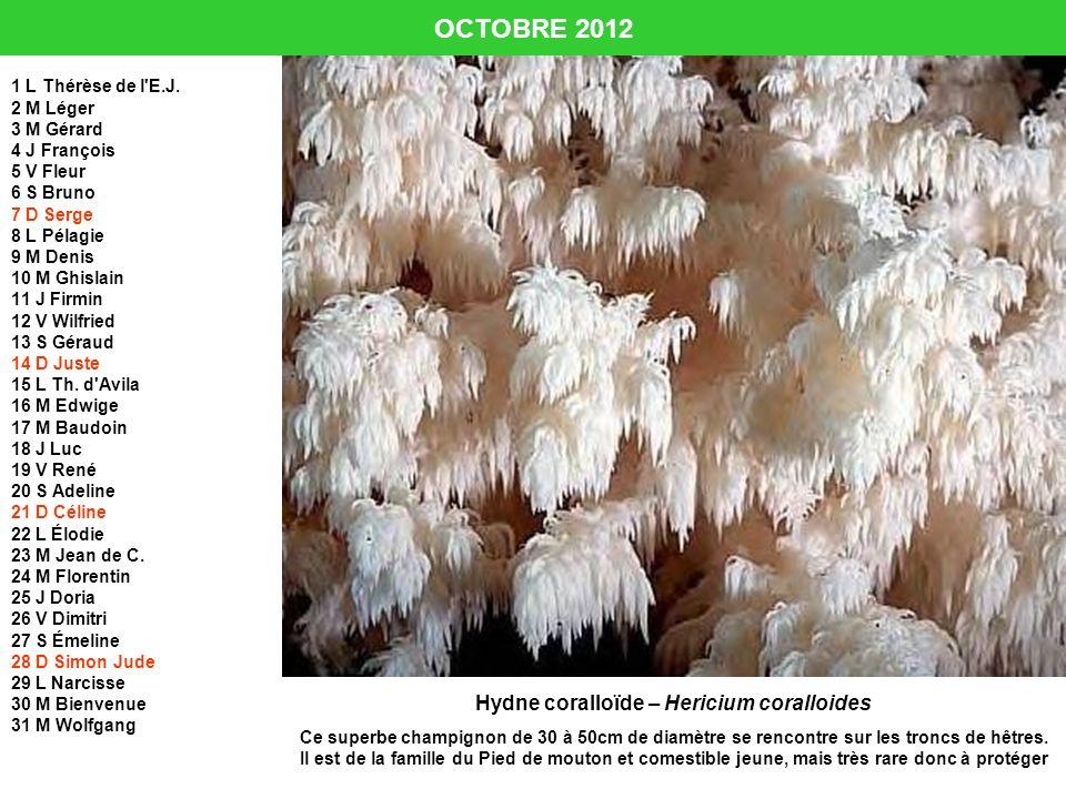 OCTOBRE 2012 1 L Thérèse de l'E.J. 2 M Léger 3 M Gérard 4 J François 5 V Fleur 6 S Bruno 7 D Serge 8 L Pélagie 9 M Denis 10 M Ghislain 11 J Firmin 12