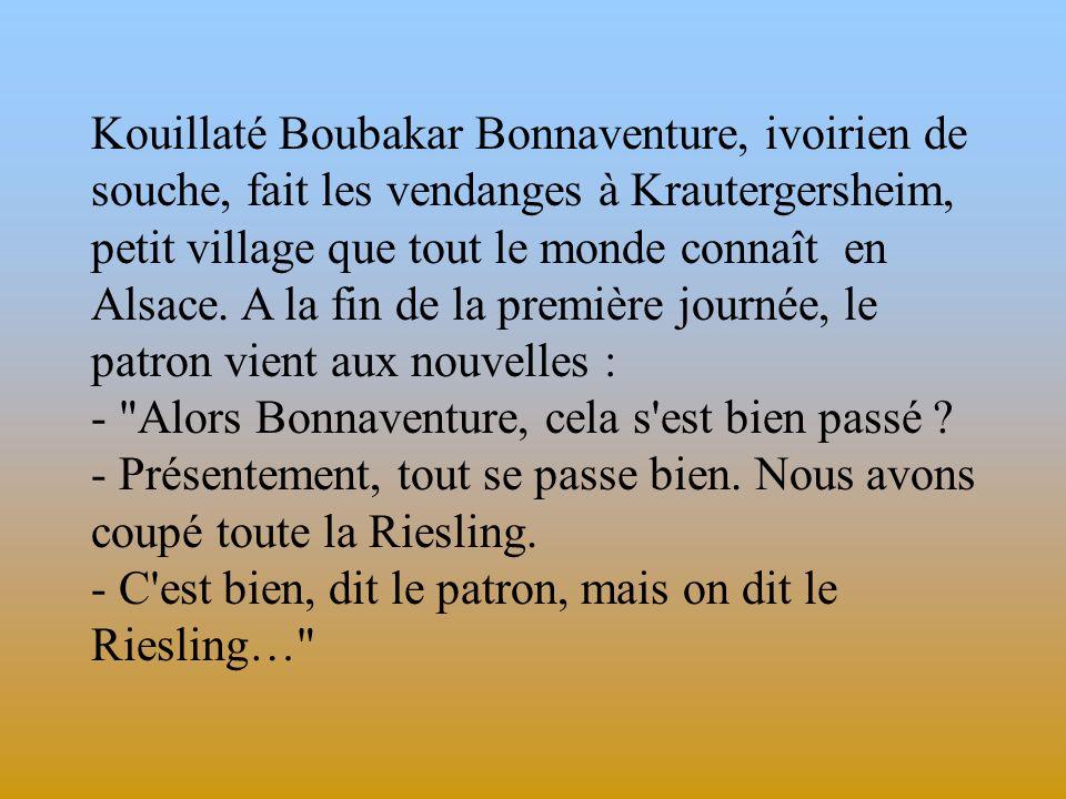 Kouillaté Boubakar Bonnaventure, ivoirien de souche, fait les vendanges à Krautergersheim, petit village que tout le monde connaît en Alsace. A la fin