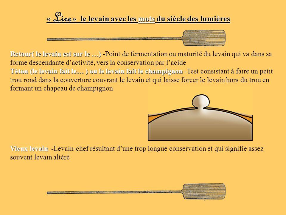 Retour( le levain est sur le …) Retour( le levain est sur le …) -Point de fermentation ou maturité du levain qui va dans sa forme descendante dactivit