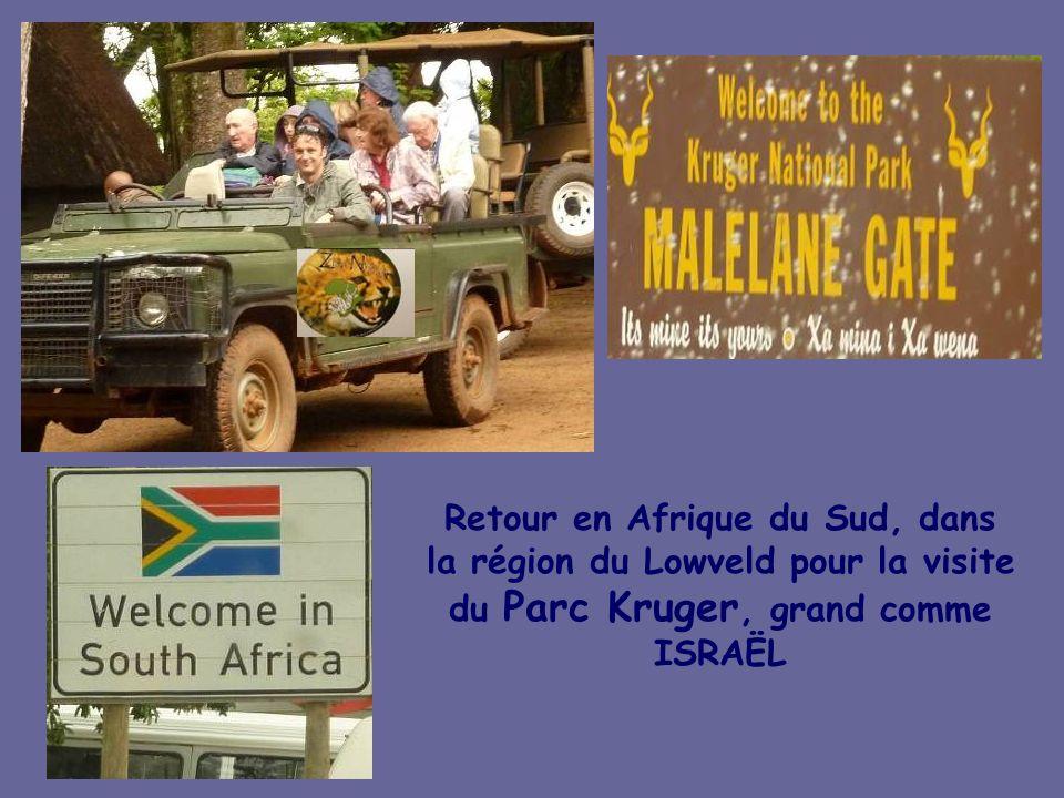 Les « Big Five » de latelier de verrerie proche de MANZINI la capitale économique du SWAZILAND