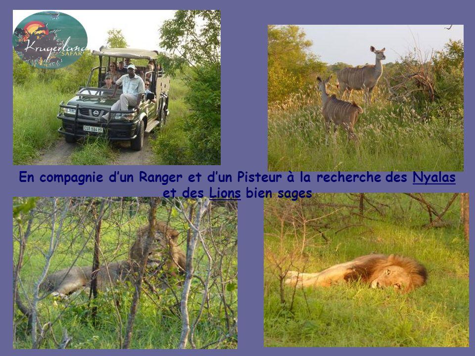 Le Kruger est la plus vaste réserve animalière dAfrique, ici lon croise Éléphants, lycaons, girafes, buffles et impalas