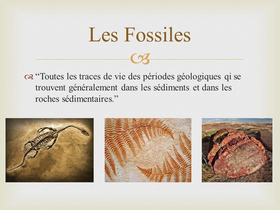 Toutes les traces de vie des périodes géologiques qi se trouvent généralement dans les sédiments et dans les roches sédimentaires. Les Fossiles