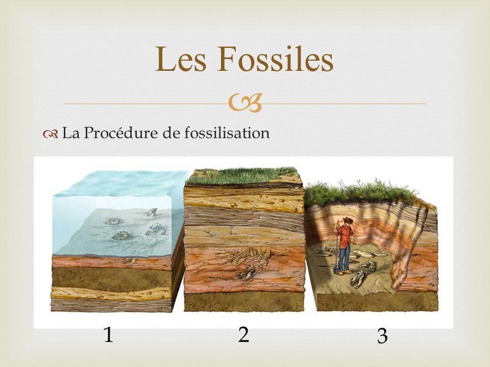 La Procédure de fossilisation Les Fossiles 12 3